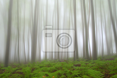 Mystic Wald mit Farn