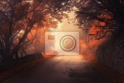 Mystical Herbst roten Wald mit Straße im Nebel. Fall nebligen Wäldern. Bunte Landschaft mit Bäumen, ländliche Straße, orange und rote Blätter und gelben Nebel. Reise. Herbst Hintergrund. Magischer dun