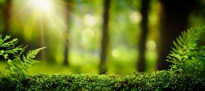 Bild Nahaufnahme auf Moos im Wald