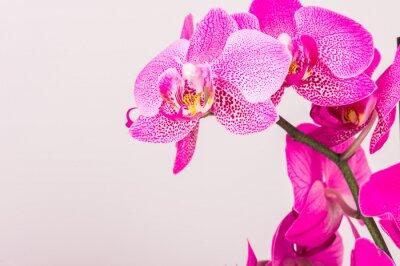 Bild Nahaufnahme der Orchideenblüte