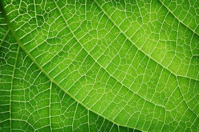 Bild Nahaufnahme von einem grünen Blatt