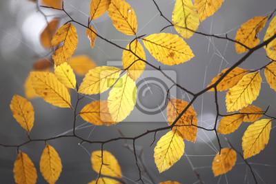 Nahaufnahme von orange gelb Herbst Blätter mit Tau Spinne Netz Hintergrund. Schöner Morgen nebelig nass Tag im Wald.