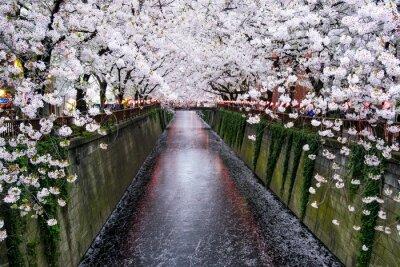 Bild Nakameguro Kanal in Tokio während der Kirschblüte im Frühling