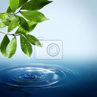 nassen Blätter und Tropfen fallen in Wasser