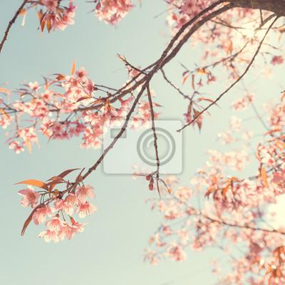 Bild Natur Hintergrund