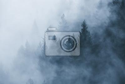 Nebel der nebelhaften Waldlandschaft morgens. Bild wurde in Slowenien, EU aufgenommen.