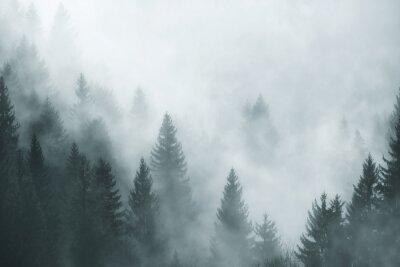 Nebel des nebeligen Waldes der Fantasie morgens nebel. Bild wurde Slowenien, EU eingelassen.