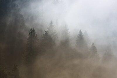 Nebelige Nadelbaumwaldlandschaft des schönen Morgens. Bild wurde Slowenien, EU eingelassen.