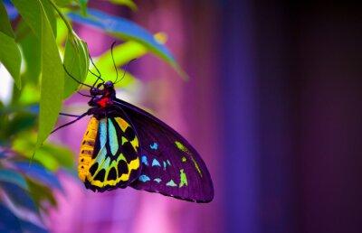 Bild Neon Schmetterling
