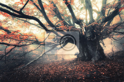 Old magical tree with big branches and orange leaves in fog at dusk. Mystical autumn foggy forest. Scenery with fairy forest in fall. Amazing colorful landscape with misty trees. Nature background
