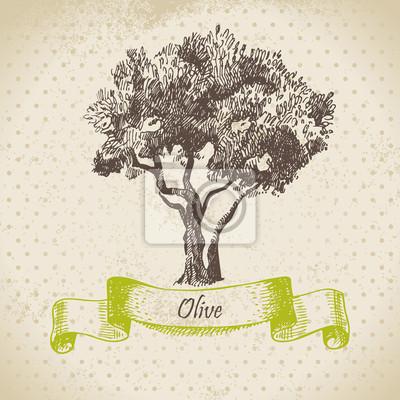 Olivenbaum. Hand gezeichnete Illustration
