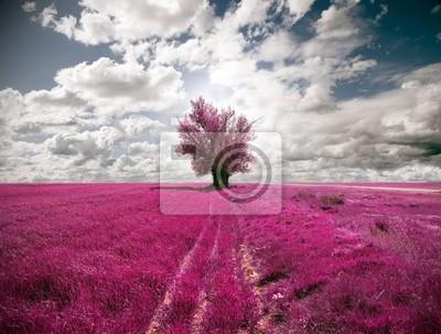 Bild oniric Landschaft und Baum
