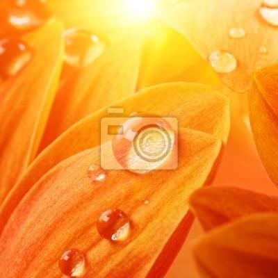 Bild Orange Blume Blütenblätter mit Wassertropfen auf sie