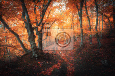Orange forest with trail in fog in autumn. Colorful landscape with beautiful enchanted trees with yellow and red leaves in fall. Amazing scene with mystical foggy forest. Fairy woodland. Nature