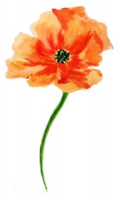 Bild Orange Mohn. Aquarellmalerei, getrennt auf weißem Hintergrund