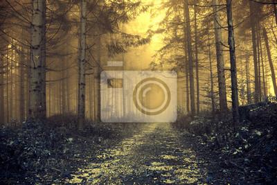 Orange nebeliger Wald der Fantasie mit mystischem Licht. Farbfiltereffekt verwendet.