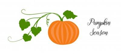 Bild Orange pumpkin, halloween design, fall or autumn pumpkin illustration with green vine leaves and orange gourd. October harvest season vector, farm vegetable that is healthy and nutritious