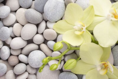 Bild Orchid.