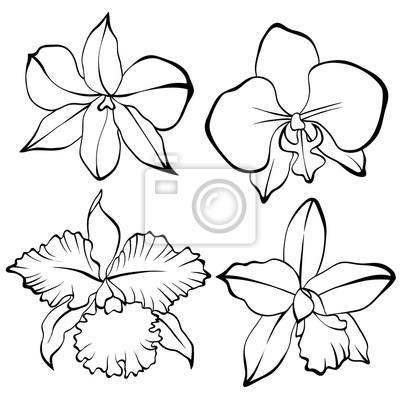 Orchid Hand Gezeichnet Set Schwarz Weiß Leinwandbilder Bilder
