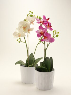 Bild Orchidea