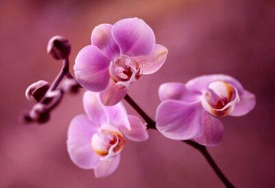 Bild Orchidea - Storczyki fiolet kaufen