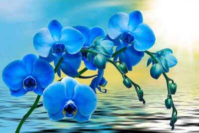 Bild Orchidee Blume Nahaufnahme
