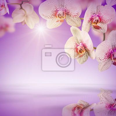 Orchidee Blumen Hintergrund