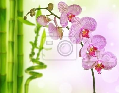 Bild Orchideen und Bambus - Wellness Hintergrund