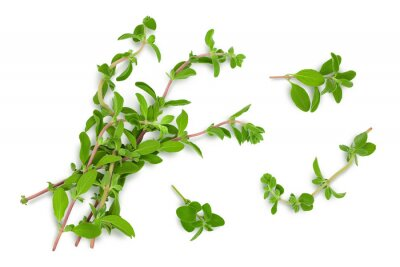 Bild Oregano or marjoram leaves isolated on white background with clipping path and full depth of field. Top view. Flat lay
