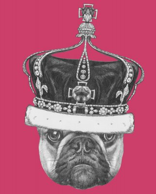 Bild Original-Zeichnung von Französisch Bulldog mit Krone. Isoliert auf farbigem Hintergrund