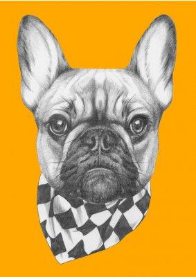 Bild Original-Zeichnung von Französisch Bulldog mit Schal. Isoliert auf farbigem Hintergrund