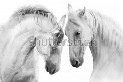 Bild Paare der schönen weißen Pferde getrennt auf weißem Hintergrund. Hohes Schlüsselbild
