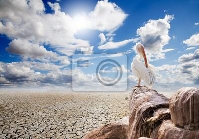 paisaje desértico y pelicano