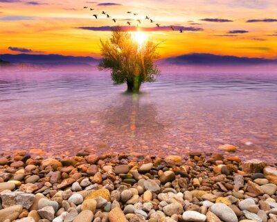 Paisaje idílico y pintoresco. Fondo de naturaleza y arbol en el agua con el atardecer