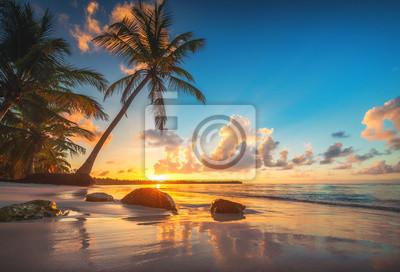Palm and tropical beach in Punta Cana, Dominican Republic