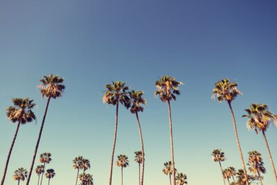 Bild Palm Trees in Retro Style