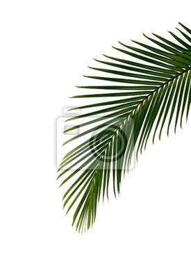 Palmenblatt Leinwandbilder Bilder Palmwedel Kokosnuss Strauss