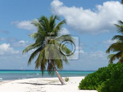 Palmenstrand In Der Dominikanischen Republik Leinwandbilder Bilder