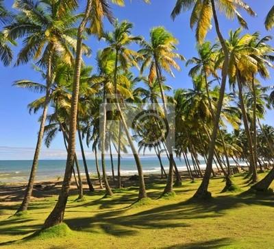 Bild Palmenwald am Strand