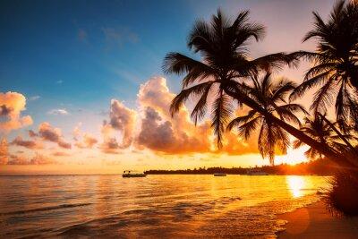 Palmtree Silhouetten auf dem tropischen Strand, Punta Cana, Dominikanische Republik