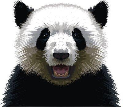 Bild PANDA - Buste