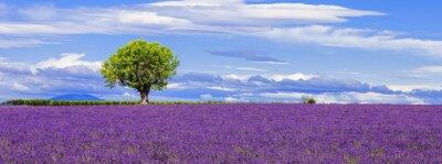 Bild Panorama-Blick auf Lavendelfeld mit Baum