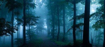 Bild Panorama des nebligen Waldes.  Märchen gruselig aussehende Wälder an einem nebligen Tag.  Kalter nebliger Morgen im Horrorwald