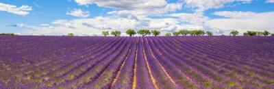 Bild Panoramablick auf Lavendelfeld