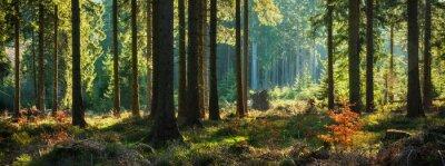 Bild Panoramic Sunny Forest in Autumn