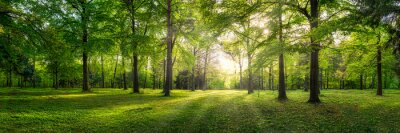 Bild Panoramic view of a forest with sunlight shining through the trees