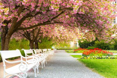 Bild Park with blossom sakura, flower lawn and benches