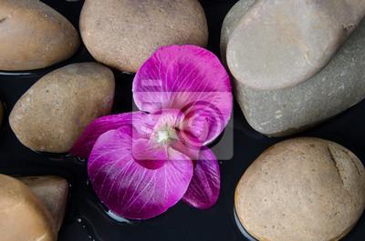 Bild Pebbles und eine lila Blume