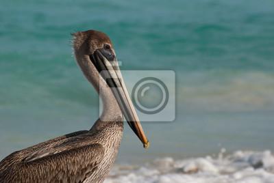 Pelican kubanischen