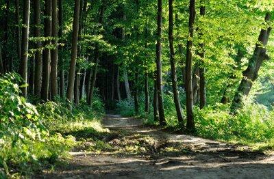Bild Pfad im Wald